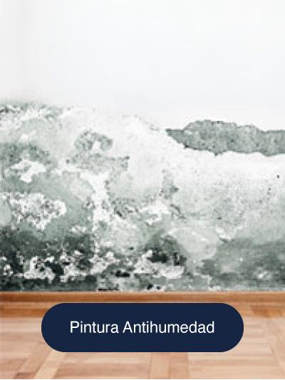 Cat-Pintura-Antimoho-Antihumedad